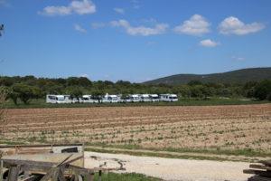 Dans les champs de lavande